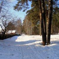 Дорога в лес . :: Мила Бовкун