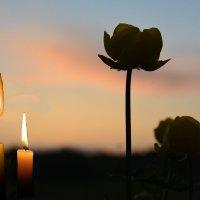 Питерцы, соболезную родным и близким...... :: Андрей Генинг.