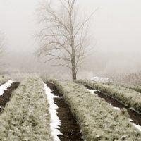 В тумане :: Вера Сафонова