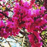 Сочинская весна :: Антонина Владимировна