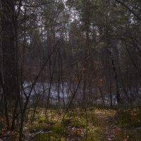 Первая зелень :: Евгений Герасименко
