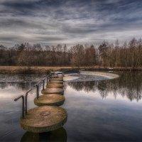 Утро в парке :: Александр Попков