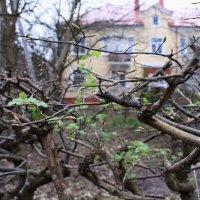 Весна... :: Марина
