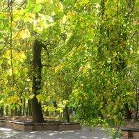Солнечным днем в парке :: Елена Семигина