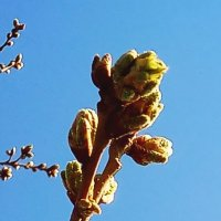Весна в Сочи :: Антонина Владимировна Завальнюк