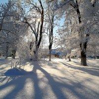 О прошедшей зиме.. :: Андрей Заломленков