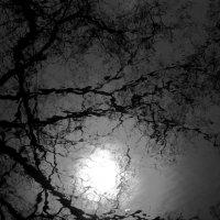 Немного солнца в холодной воде :: Tanja Gerster
