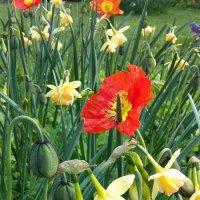 Весна :: Лилия Дмитриева