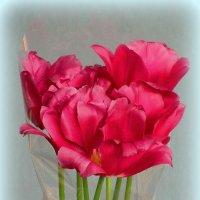 Семь тюльпанов :: Сергей Карачин