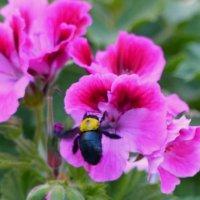 Какой цветочек! :: Пётр Беркун