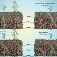 Инфографика: плотность почвы :: Lyuda Kr.