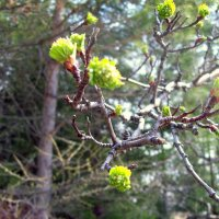 Ранняя весна :: alemigun