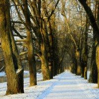 Зима в Царском Селе... :: Юрий Цыплятников
