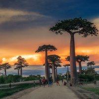 Закатные посиделки в долине баобабов...Мадагаскар! :: Александр Вивчарик