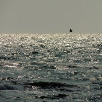 Азовское море :: Роман Савоцкий