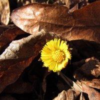 Первые цветы... :: Ирина Румянцева