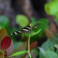 Бабочка :: Таня Фиалка