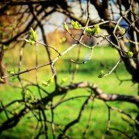 Весенний прорыв :: Вероника Озем