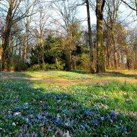 Цветочная поляна :: Valentina M.