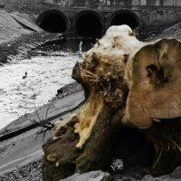 Кусочек природы в городе :: Роман Никитин
