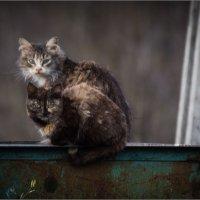 Коты помойные) :: Сергей Величко