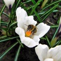 Весна. :: Лара ***