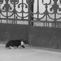 безприютный кот :: Наталья Сазонова