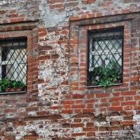 Кафедральный собор святых Петра и Павла, задний двор :: Владимир Брагилевский