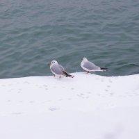 Чайки :: Alexander Borisovsky