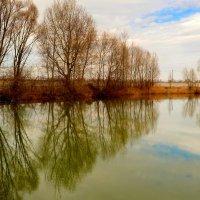 деревья у озера :: Александр Прокудин