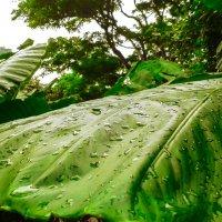 дождь :: Екатерина Самохина