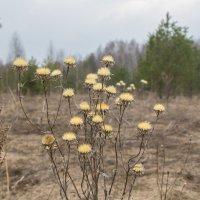 весна :: Светлана ~~~