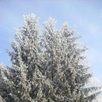 последнее дыхание зимы :: Евгений Гузов