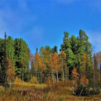 Осенний лес :: Сергей Чиняев