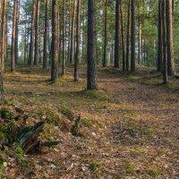 Весенний лес :: Александр Березуцкий (nevant60)