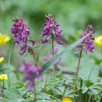 Яркие весенние цветы в саду :: Иван Лазаренко