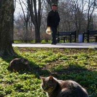 Весна наКОТИла :: Анатолий Шулков