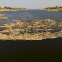 Река Тархунка :: Анастасия сосновская
