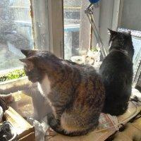 Кошки на окошке :: Mary Коллар