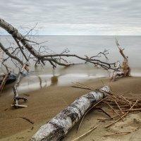 Падшие дерева 2 :: Владимир Самсонов