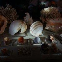 To hear the harmony in the sea shells. Услышать гармонию морских ракушек. :: Tatiana Golubinskaia