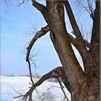 зима, солнце, обломанная ... :: Юрий Ефимов