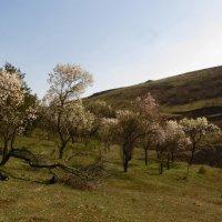 Весна в Грузии :: Наталья Джикидзе (Берёзина)