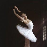 лебедь :: Мила Гусева