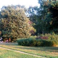 В  парке летом :: Елена Семигина