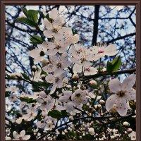 Раняя весна :: Владимир Бровко