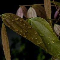 после дождя :: Александр