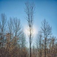 Просто дерево :: Станислав Пересыпкин