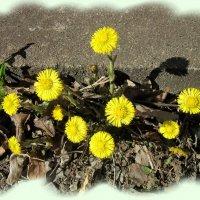Опять весна на белом свете... :: veera (veerra)