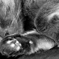 Морфей продолжает сладко  спать...1 :: Валерия  Полещикова